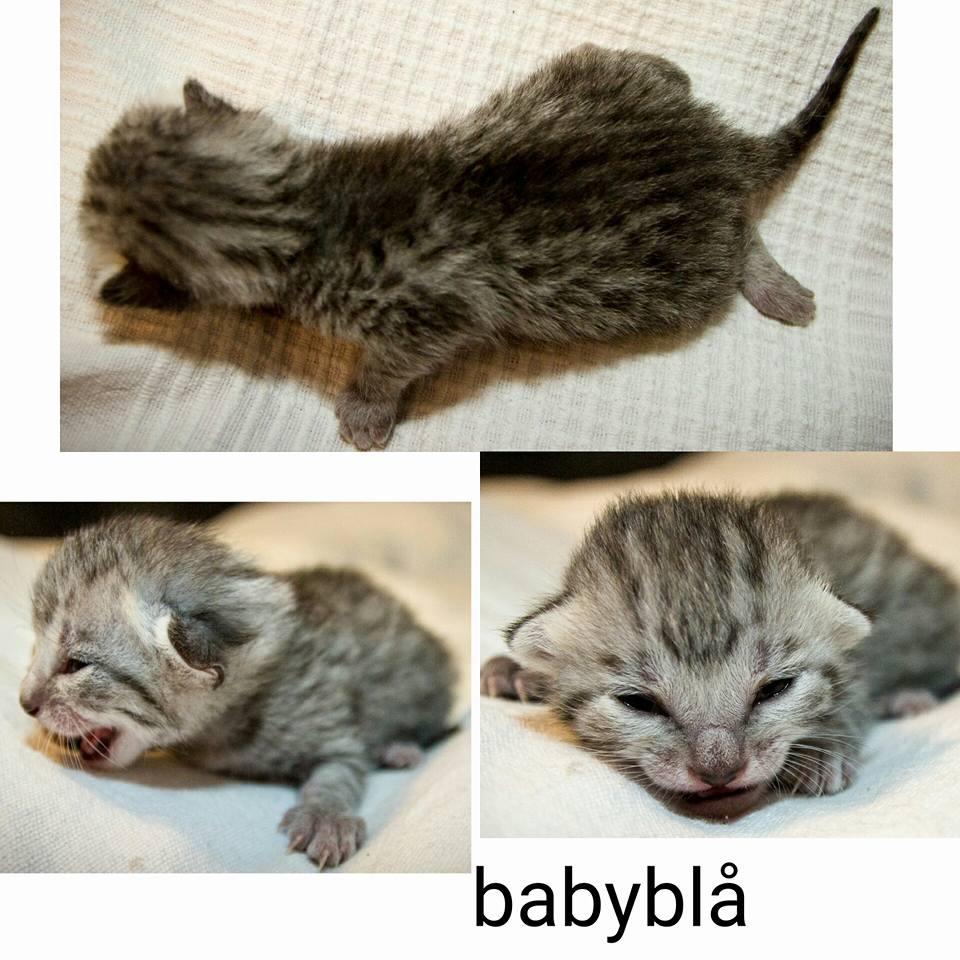 B-Kitten 1 babyblue