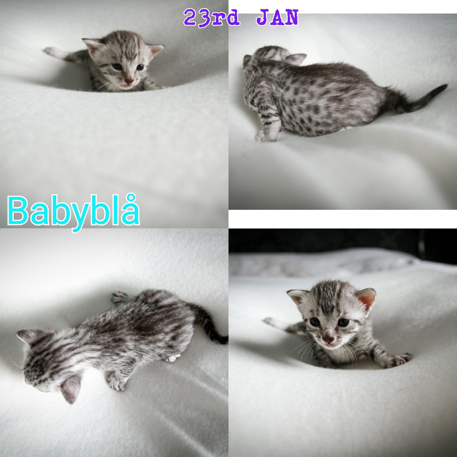 babyblue23-1