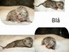 B-Kitten 2