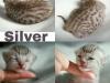 C-silver1_23-1
