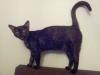 The witch-cat Cheeba