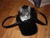 Bag-Cat